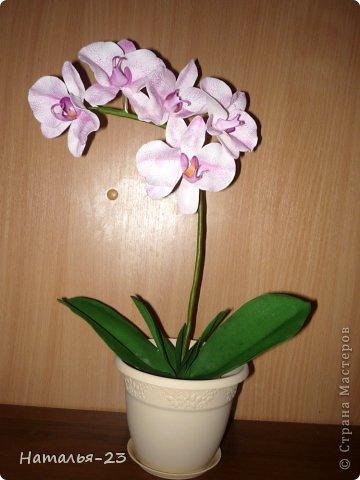 Весенние  цветочки... фото 3