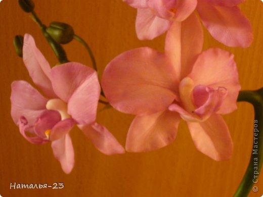 Орхидея... фото 2