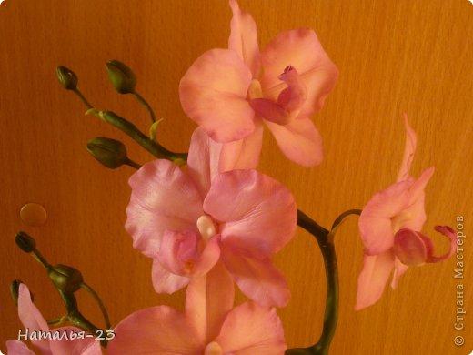 Орхидея... фото 3