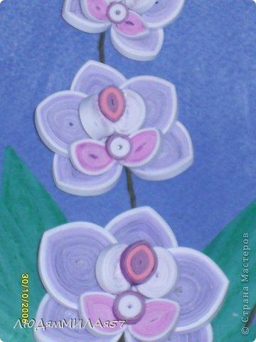 Здравствуйте жители Страны Мастеров!Хочу познакомить вас со своей весёлой семьёй орхидей.Эта работа мой глубокий реверанс Анастасии Бертовой за её привязанность к этим цветам,которая передалась и мне.Нижняя веточка - точная копия её розовых орхидей.Спасибо,Настя за МК,ещё раз прошу прощения, не умею делать ссылки и научить некому. фото 4