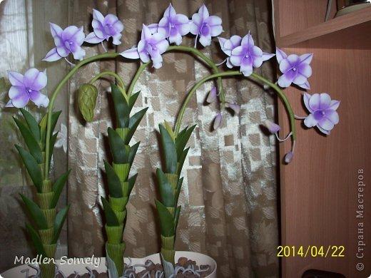 И снова орхидея!!! фото 1
