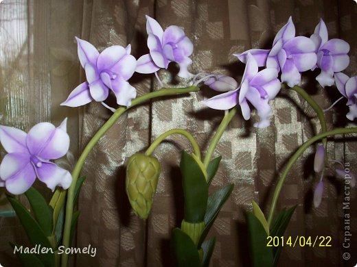 И снова орхидея!!! фото 2