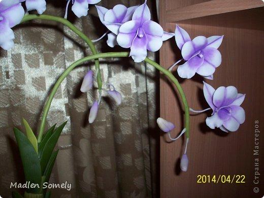 И снова орхидея!!! фото 3