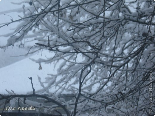 Вчера вечером пошёл снег. Сплошной стеной.  Фото сделаны в городском парке (автор Рая Кочева) фото 4