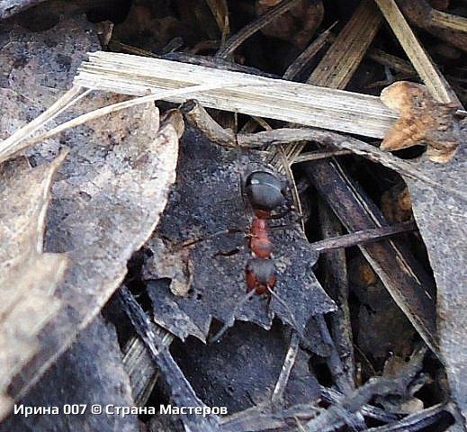 Надеюсь, что фото насекомышей будут пополняться. Очень люблю бабочек. Дневной павлиний глаз. Умничка. Прирождённая фотомодель. Совсем не боялась. Фотик чуть ли не на неё ставила. фото 16
