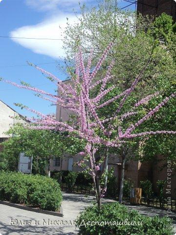 Авлабарский парк Тбилиси дышит весной. В него мы заглянули сразу после собора Цминда Самеба (см. предыдущие фоторепортажи).