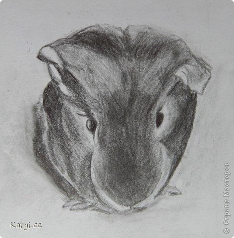 Нарисованная свинка морская