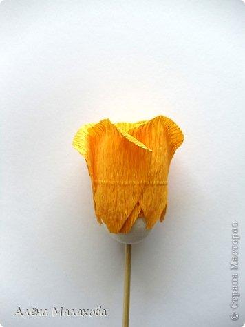 Мастер-класс Флористика Роза из гофрированной бумаги Бумага гофрированная Клей фото 22