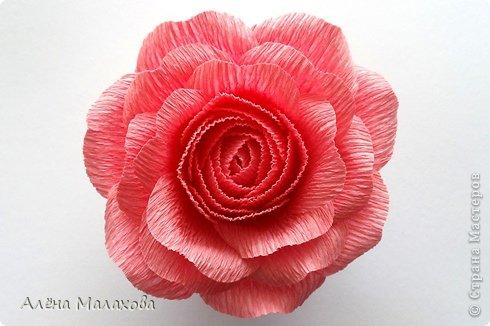 Мастер-класс Флористика Роза из гофрированной бумаги Бумага гофрированная Клей фото 26