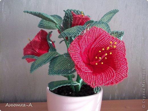 Бисероплетение цветы гибискус мастер класс с пошаговым фото