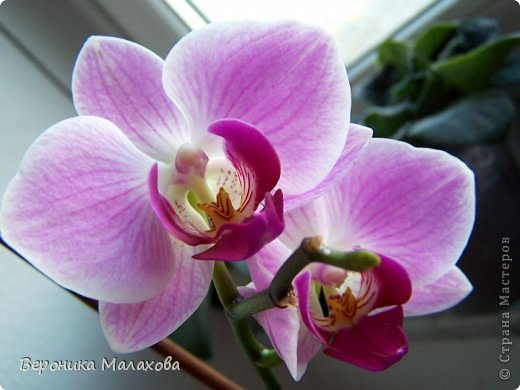 Хочу предложить вашему вниманию несложный мастер-класс по изготовлению декоративного элемента - цветок орхидеи. Он может быть центральным элементом, например, открытки или альбома. Он сам по себе выглядит очень роскошным и подарит неповторимость вашей работе :) фото 3