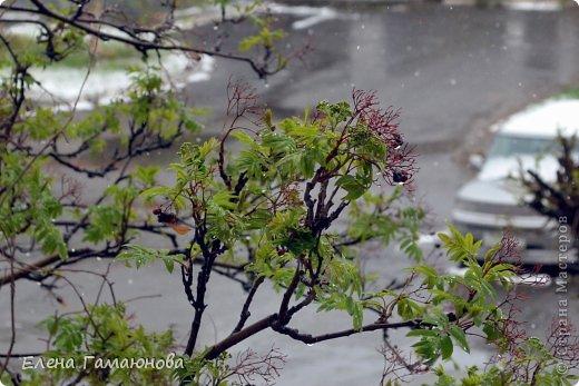 Оказывается,плохая примета-убирать зимние вещи раньше июня... :) фото 2