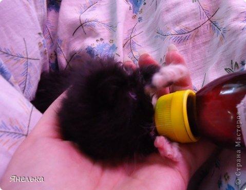 Всем доброго времени суток! Решила поделиться историей о том, как в мае 2012 года у нас появилась Коша, Кошенька, Кошуля..... На тот момент у нас уже жили собака и два кота, и еще одного мы вовсе не планировали, но однажды.... фото 7