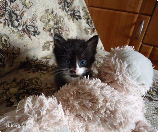 Всем доброго времени суток! Решила поделиться историей о том, как в мае 2012 года у нас появилась Коша, Кошенька, Кошуля..... На тот момент у нас уже жили собака и два кота, и еще одного мы вовсе не планировали, но однажды.... фото 14