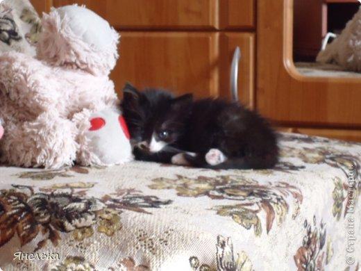 Всем доброго времени суток! Решила поделиться историей о том, как в мае 2012 года у нас появилась Коша, Кошенька, Кошуля..... На тот момент у нас уже жили собака и два кота, и еще одного мы вовсе не планировали, но однажды.... фото 15