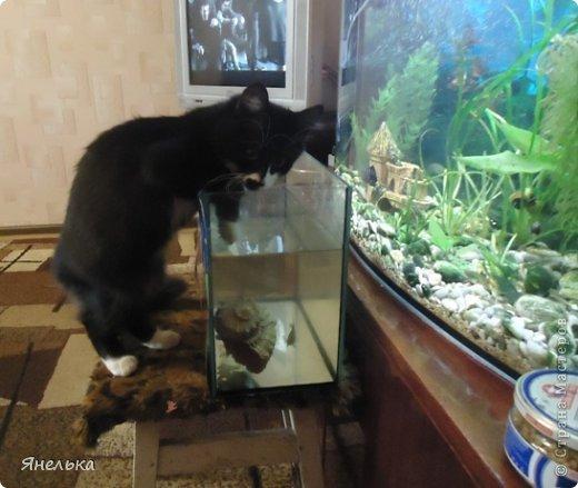 Всем доброго времени суток! Решила поделиться историей о том, как в мае 2012 года у нас появилась Коша, Кошенька, Кошуля..... На тот момент у нас уже жили собака и два кота, и еще одного мы вовсе не планировали, но однажды.... фото 24