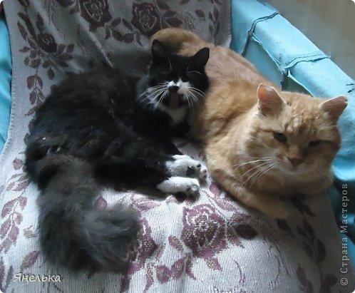 Всем доброго времени суток! Решила поделиться историей о том, как в мае 2012 года у нас появилась Коша, Кошенька, Кошуля..... На тот момент у нас уже жили собака и два кота, и еще одного мы вовсе не планировали, но однажды.... фото 26