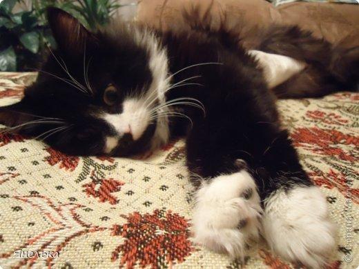 Всем доброго времени суток! Решила поделиться историей о том, как в мае 2012 года у нас появилась Коша, Кошенька, Кошуля..... На тот момент у нас уже жили собака и два кота, и еще одного мы вовсе не планировали, но однажды.... фото 31