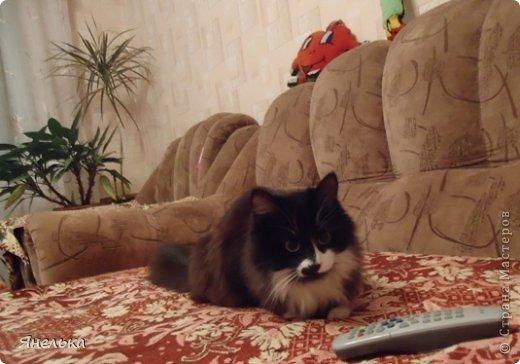 Всем доброго времени суток! Решила поделиться историей о том, как в мае 2012 года у нас появилась Коша, Кошенька, Кошуля..... На тот момент у нас уже жили собака и два кота, и еще одного мы вовсе не планировали, но однажды.... фото 32
