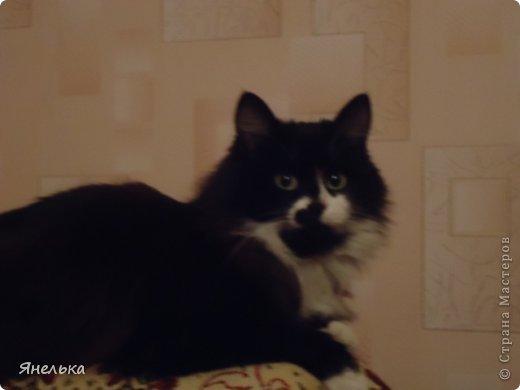 Всем доброго времени суток! Решила поделиться историей о том, как в мае 2012 года у нас появилась Коша, Кошенька, Кошуля..... На тот момент у нас уже жили собака и два кота, и еще одного мы вовсе не планировали, но однажды.... фото 36