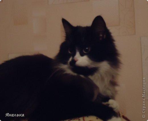 Всем доброго времени суток! Решила поделиться историей о том, как в мае 2012 года у нас появилась Коша, Кошенька, Кошуля..... На тот момент у нас уже жили собака и два кота, и еще одного мы вовсе не планировали, но однажды.... фото 35