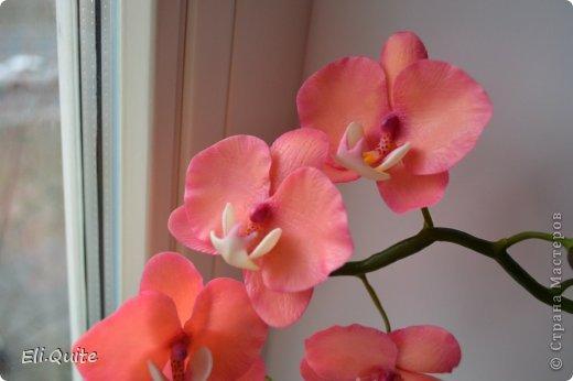 орхидея фаленопсис фото цвета
