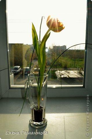 Тюльпан с надписью фото 4