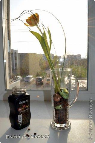 Тюльпан с надписью фото 5