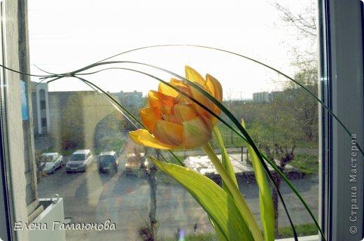 Тюльпан с надписью фото 7