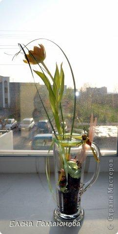 Тюльпан с надписью фото 8