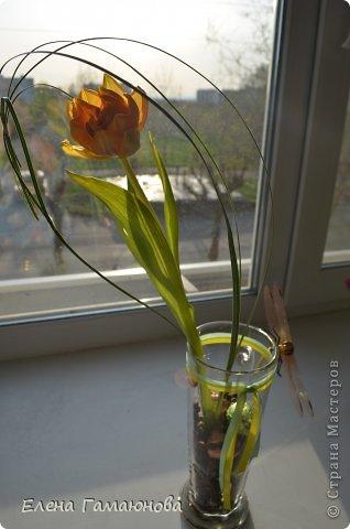 Тюльпан с надписью фото 9