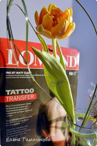 Тюльпан с надписью фото 11
