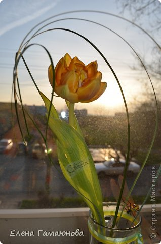 Тюльпан с надписью фото 1