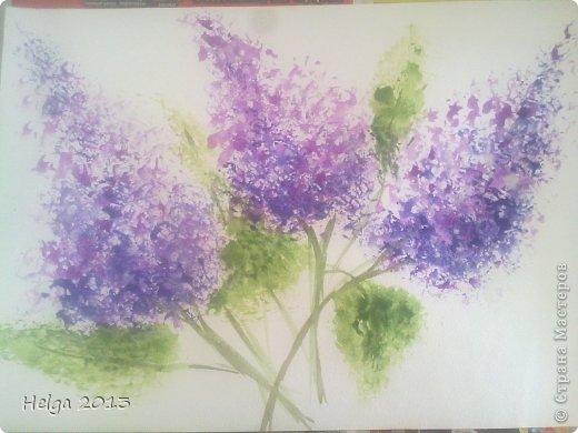 Плетущиеся цветы для сада фото и названия