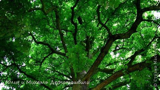 Стоит дерево