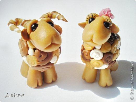 барашки и овечки фото 2