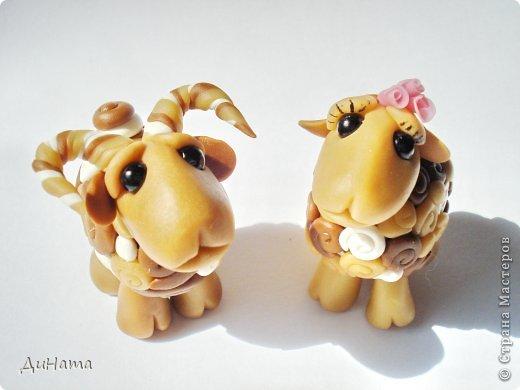 барашки и овечки фото 3