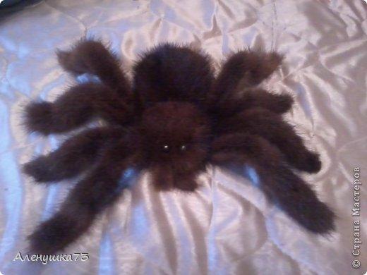 """Здравствуйте мастера СМ! Хочу показать результат работы на который меня с подвигла как всегда - моя мама. Приспичило ей сделать на веранде паутину с пауком, от паутины я """"отмахалась"""", а вот идея с пауком меня заинтересовала, причем она просила купить паука, но мне стало интересно попробовать свои силы. И вот насмотревшись на фото этих красавцев в инете и не найдя нужного мне мк я решила поэкспериментировать. В создании МК я новичок поэтому прошу уж совсем строго не судить, так захватило, что забывала фоткать процесс. начнем нам понадобиться:  фото 18"""