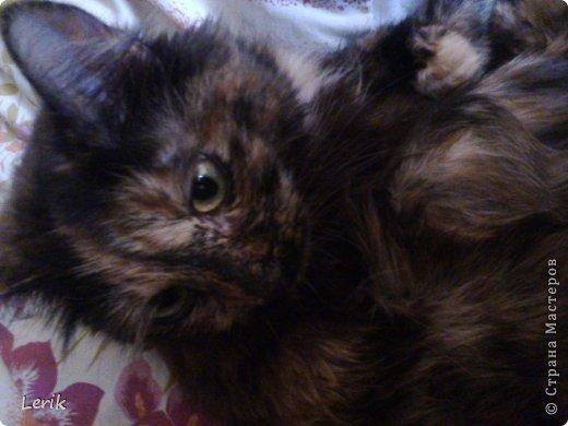 Начнем по порядку. Это наша старшая -Юна. Не могу сидеть и слушать как плачут мелкие, подобрали, обогрели и оставили. Уже 5 лет с нами.Воспитывалась двумя котами, выросла очень послушной. фото 13