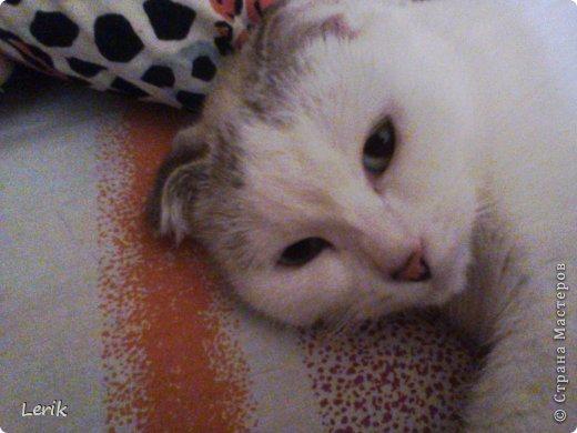 Начнем по порядку. Это наша старшая -Юна. Не могу сидеть и слушать как плачут мелкие, подобрали, обогрели и оставили. Уже 5 лет с нами.Воспитывалась двумя котами, выросла очень послушной. фото 9