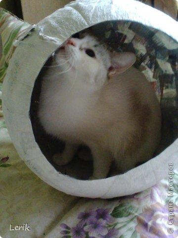 Начнем по порядку. Это наша старшая -Юна. Не могу сидеть и слушать как плачут мелкие, подобрали, обогрели и оставили. Уже 5 лет с нами.Воспитывалась двумя котами, выросла очень послушной. фото 14