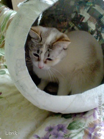 Начнем по порядку. Это наша старшая -Юна. Не могу сидеть и слушать как плачут мелкие, подобрали, обогрели и оставили. Уже 5 лет с нами.Воспитывалась двумя котами, выросла очень послушной. фото 15