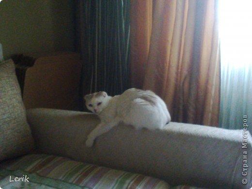 Начнем по порядку. Это наша старшая -Юна. Не могу сидеть и слушать как плачут мелкие, подобрали, обогрели и оставили. Уже 5 лет с нами.Воспитывалась двумя котами, выросла очень послушной. фото 12
