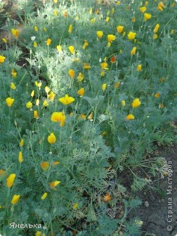 Всем доброго времени суток! Решила показать немного своих цветочков, которые цвели в саду весной..... приятного просмотра фото 28