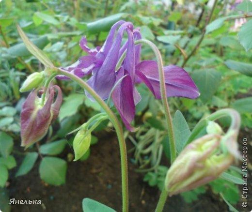 Всем доброго времени суток! Решила показать немного своих цветочков, которые цвели в саду весной..... приятного просмотра фото 2