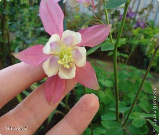 Всем доброго времени суток! Решила показать немного своих цветочков, которые цвели в саду весной..... приятного просмотра фото 8