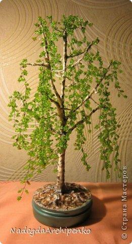 Первое дерево фото 5