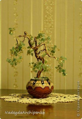 Первое дерево фото 6