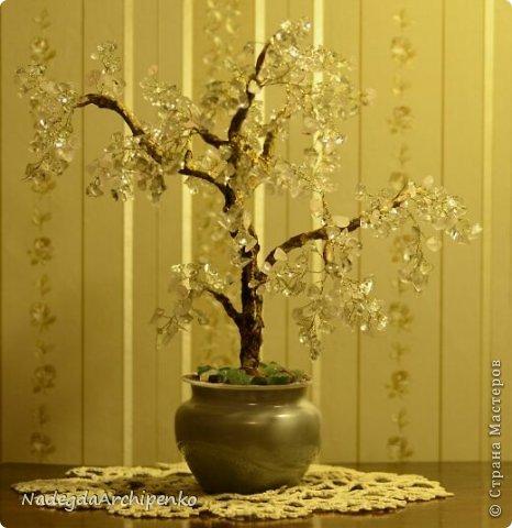 Первое дерево фото 7