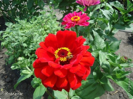 Всем доброго времени суток! Я с очередной порцией своих цветов, в последнее время нет ни сил, ни вдохновения, только мечты о мирной жизни................ Стараюсь заниматься привычными делами, это помогает немного отвлечься и верить, что все будет хорошо........... фото 3